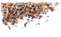 mifuma Seeds (Sämereien) 25kg