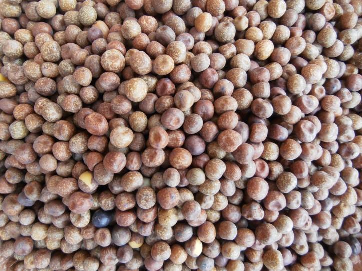 Erbsen Maple Peas 2,5kg