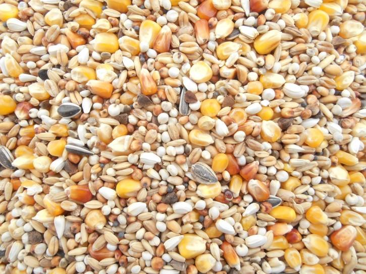Sandeck Reise ohne Hülsenfrüchte 25kg