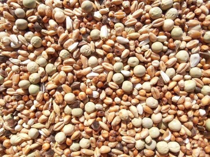Sandeck Kurzschnäbler 25kg