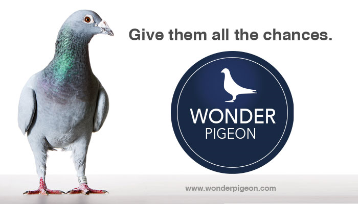 Slide Wonder Pigeon