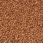 Erdnüsse braun Vanrobaeys 25kg