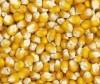 VANROBAEYS Mais Cribbs gelb Nr.78 25kg