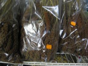 Kolbenhirse rot 1 kg