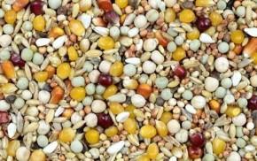 Kampol JE Junior Extra ohne Weizen 25kg