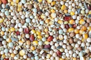 Kampol R Zuchtmischung 25kg