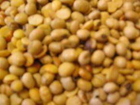 Sojabohnen getoastet 2,5kg