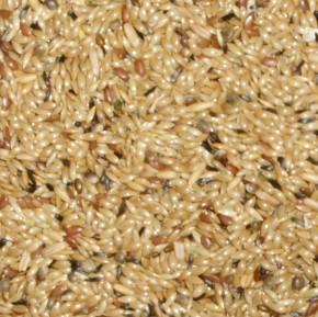 Paloma Kanarienfutter ohne Rübsen 20kg