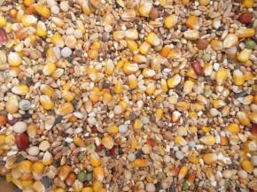 Kampol U Taubenfutter 40x25kg frei Haus